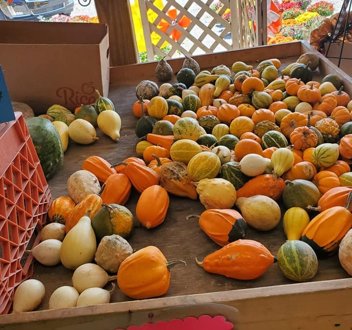 Second Harvest Food Bank Food Drive